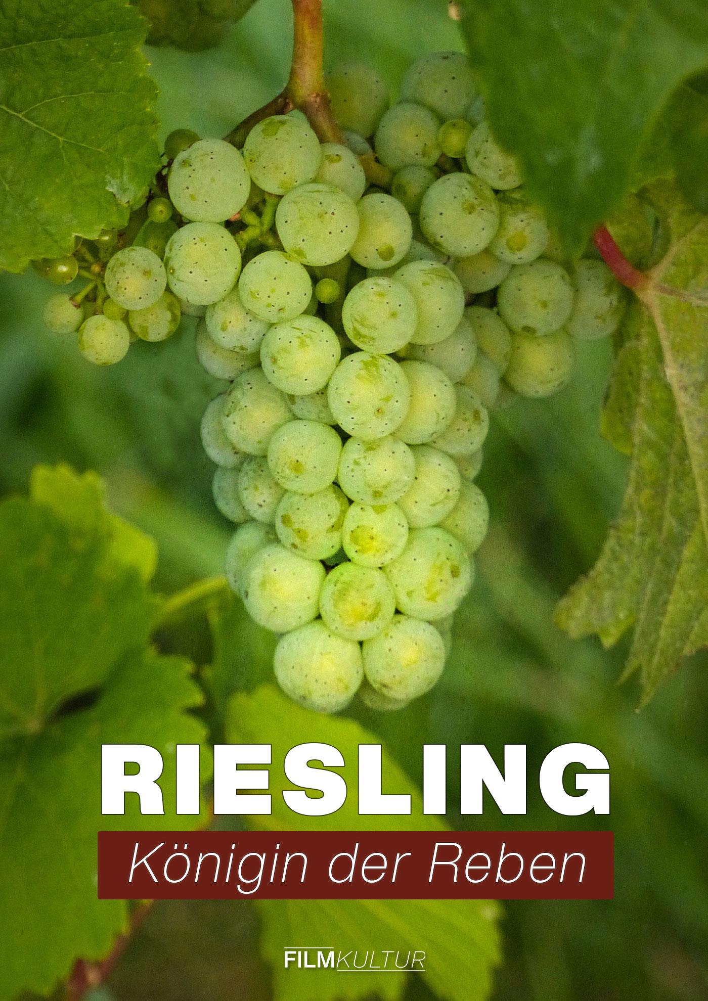 Filmplakat Riesling - Königin der Reben